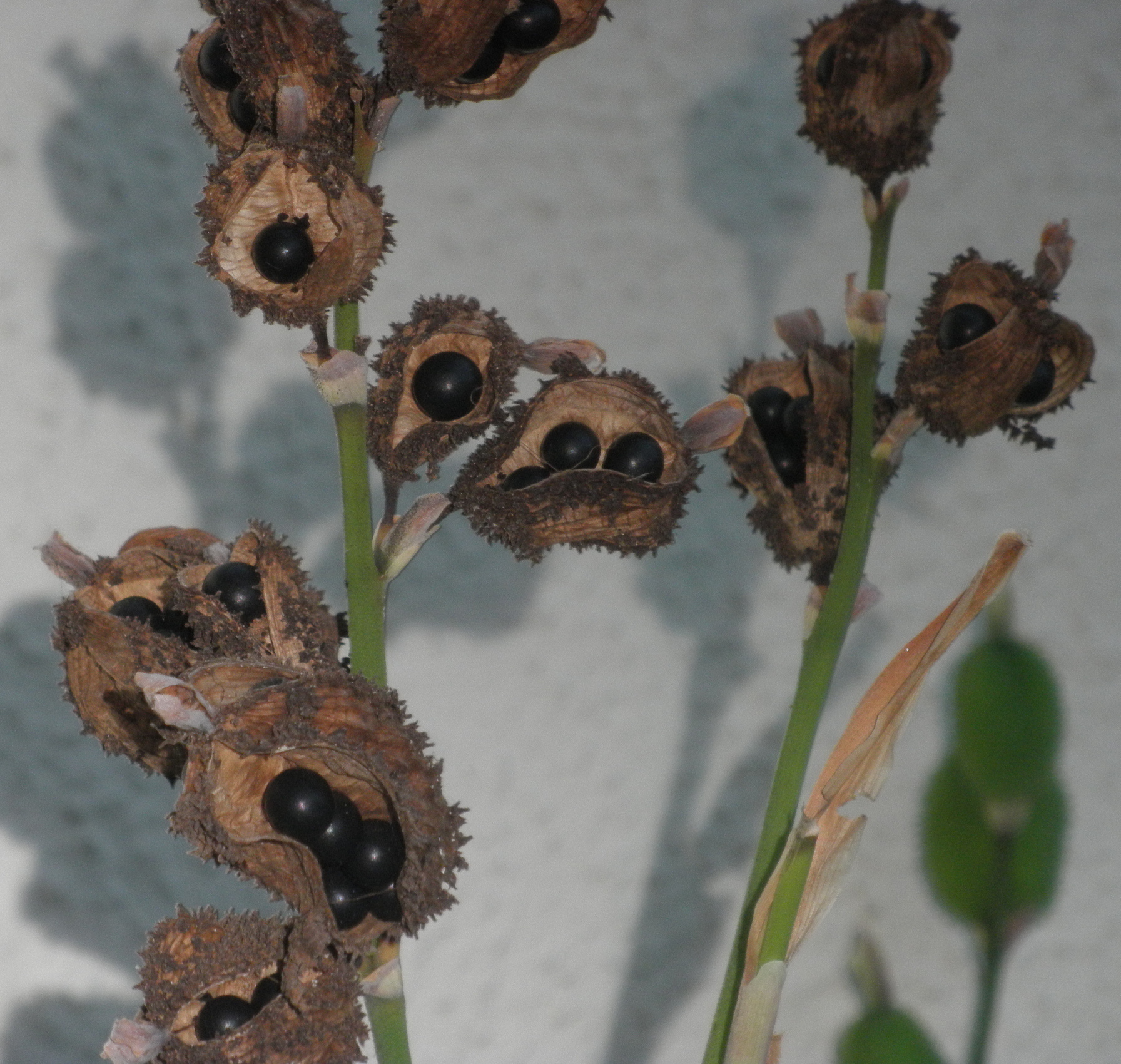 seed pods with berries(2) - Dreams that help you  grieve and reconcile with estranged family members